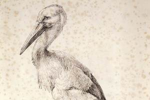 Albrecht_Dürer_-_The_Stork_web